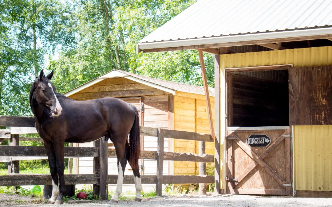 Science Says Your Horse Needs Field Turnout