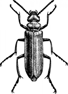 The Animal Synergist Beetle