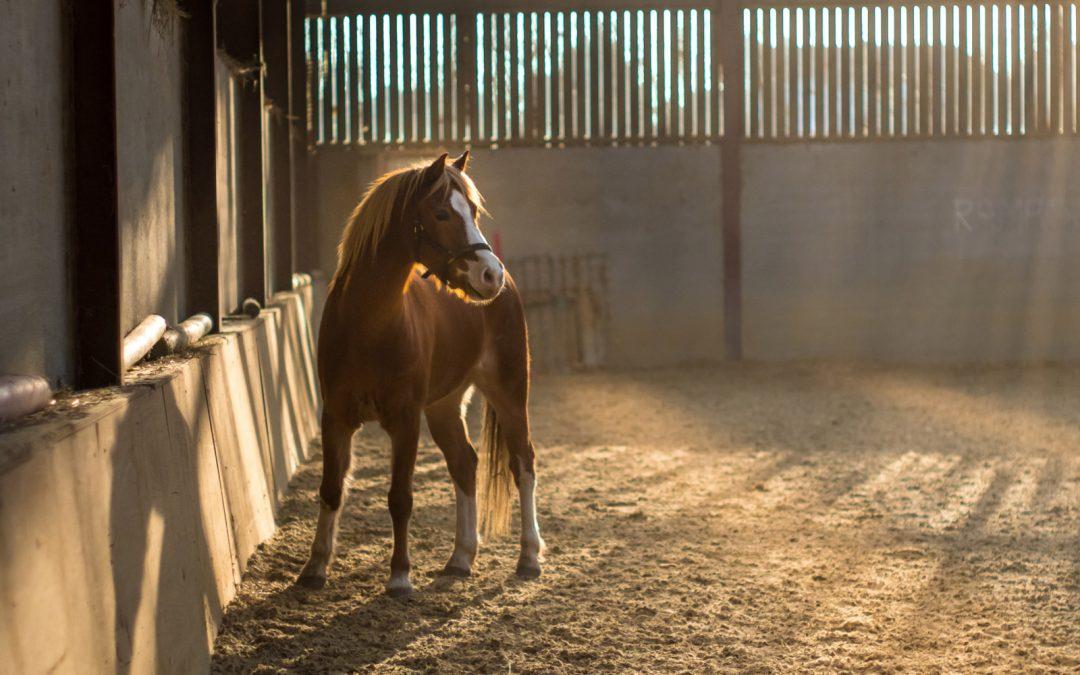 Equine Metabolic Syndrome: Risk Assessment (Part 1)