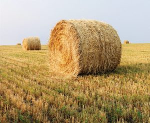 The Animal Synergist HAy
