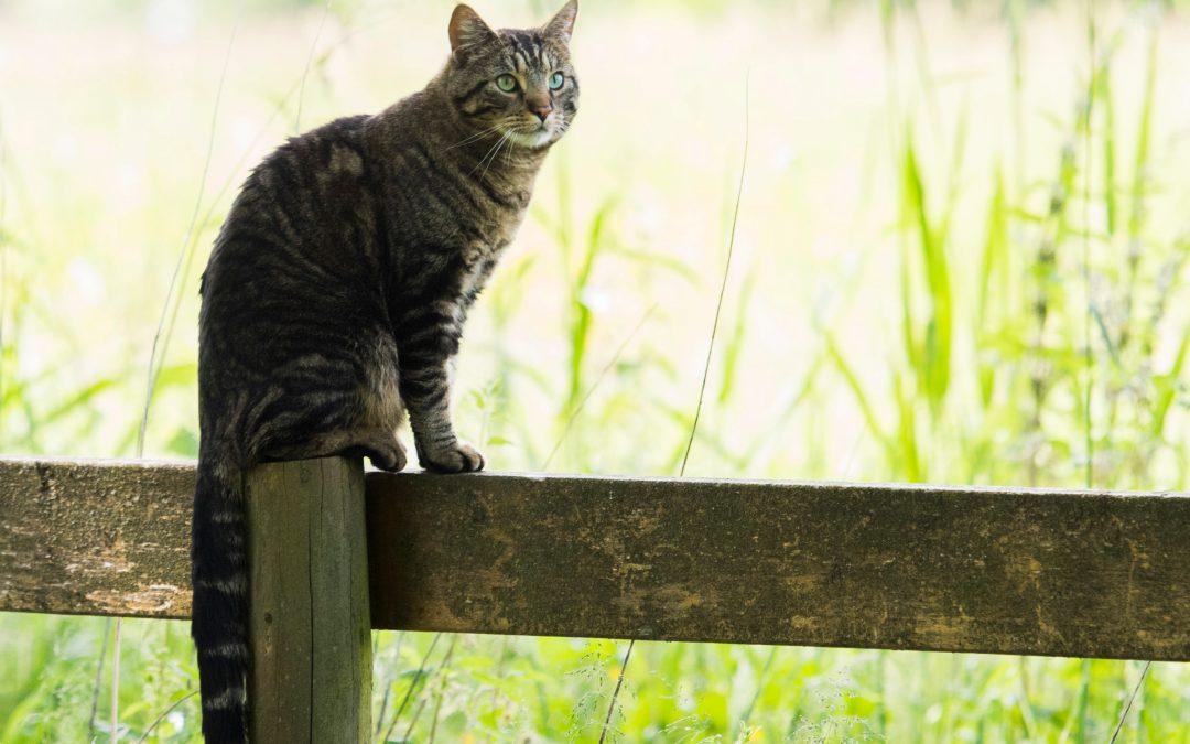 Feline Nutrition: What Makes Cats So Unique?