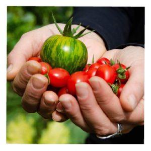 The Animal Synergist Vegetables