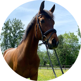 The Animal Synergist Horse