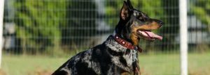 The Animal Synergist Dog Picture